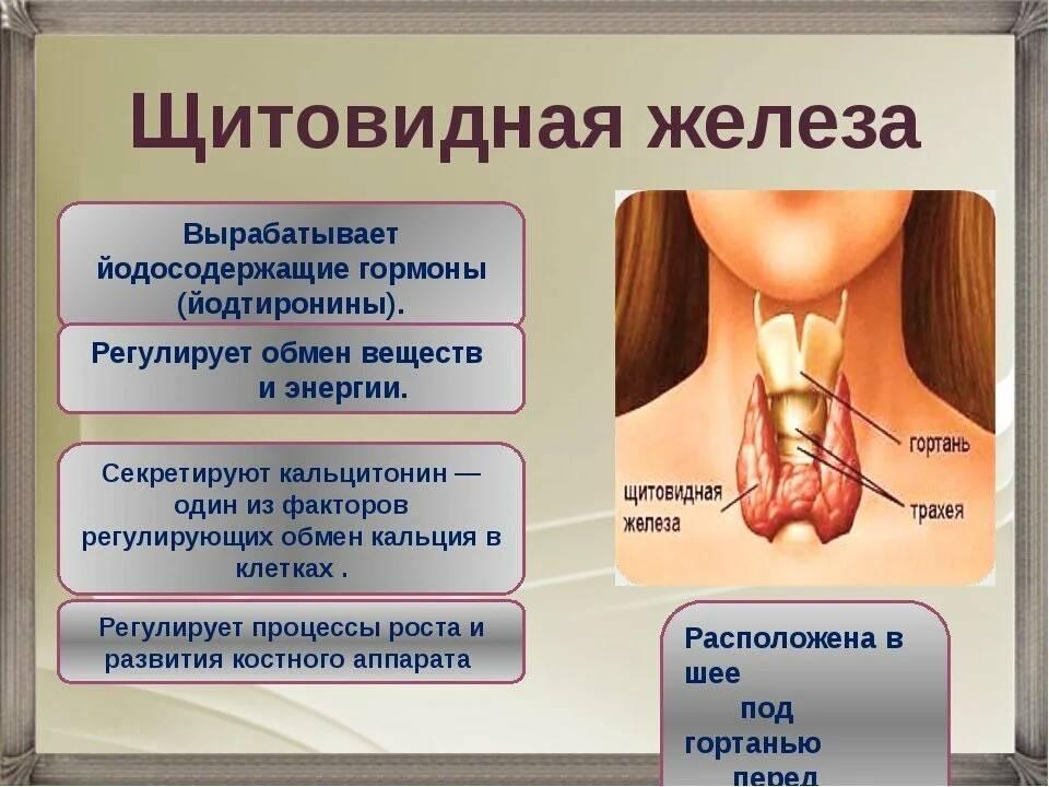 Можно принимать алкоголь после удаления щитовидной железы: алкоголь, диета, железы, лекарственные препараты, можно, последствия, принимать, таблица, удаления, щитовидной