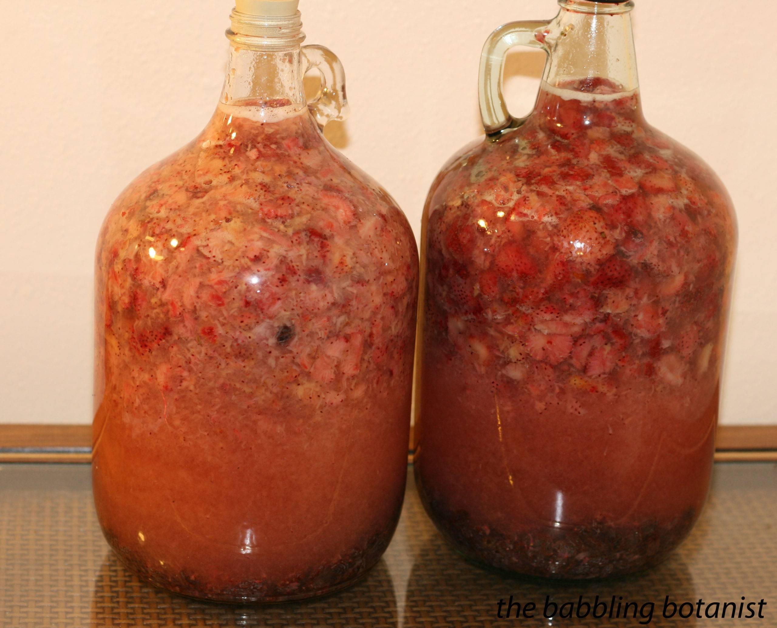 Вино из ранеток: простые и оригинальные рецепты приготовления в домашних условиях