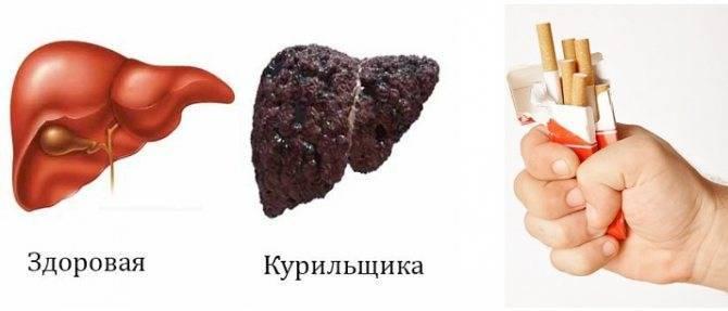 Влияет ли курение на печень человека и может ли никотин негативно сказаться на почках курильщика