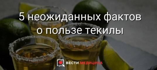 15 фактов, подтверждающих, что текила – полезный напиток — ремонт это легко!