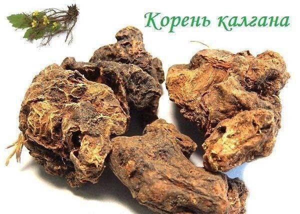 Калгановка – рецепт настоек на корне калгана
