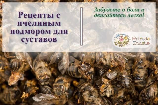Пчелиный подмор: что это и какими лечебными свойствами обладает?