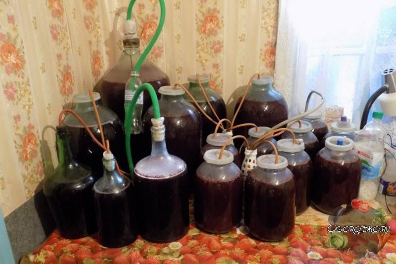 Домашний рецепт приготовления вина из изюма