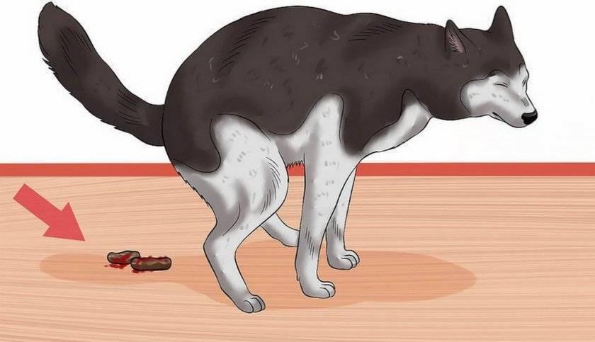 Собаку рвет с кровью: какие причины, что делать, чем помочь питомцу