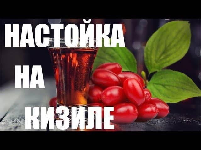 Настойка на кизиле в домашних условиях рецепты на водке на коньяке на спирту на самогоне наливка ликер чача