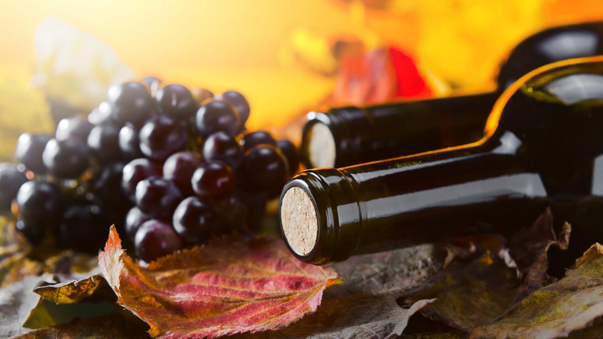 Энотерапия: какие недуги лечит вино? самые популярные спа-процедуры с использованием вина