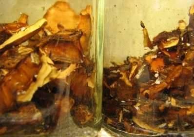 Особенности приготовления настоек из перегородок грецкого ореха для лечения разных болезней