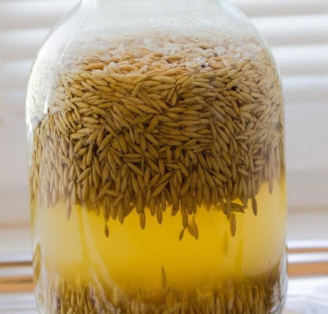 Квас из овса в домашних условиях. рецепт. как приготовить?