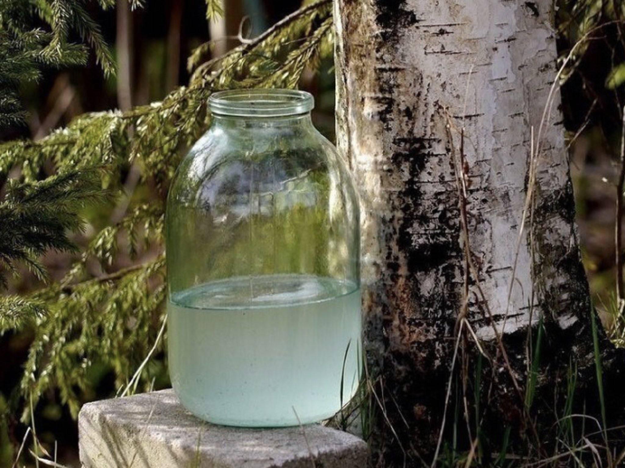 Вино из березового сока без кипячения: рецепт и фото