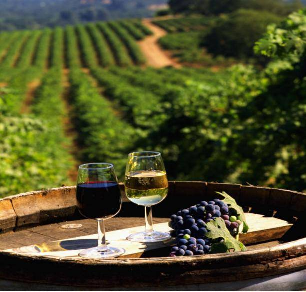 Что такое марочные вина — определение и обзор