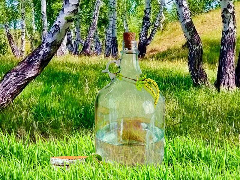 Самогон из березового сока - 2 рецепта браги и перегонка | алкофан | яндекс дзен