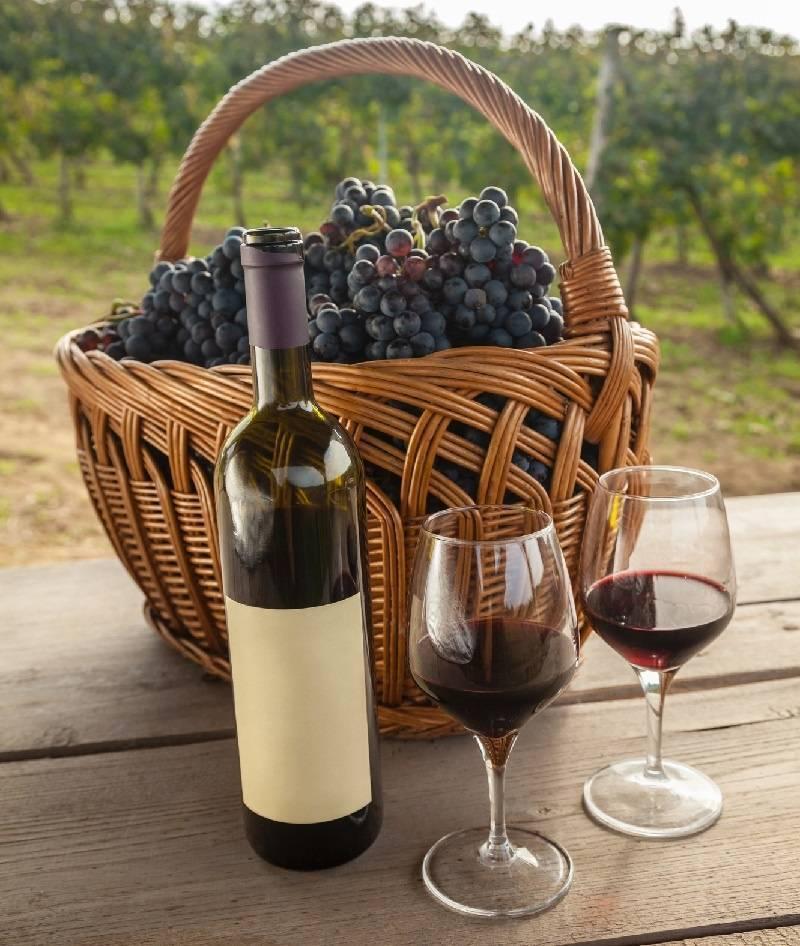 Виноград сира: описание сорта и характеристики, где растет и выращивание с фото