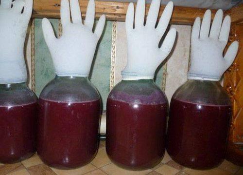 Как сделать вино из домашнего винограда изабелла своими руками