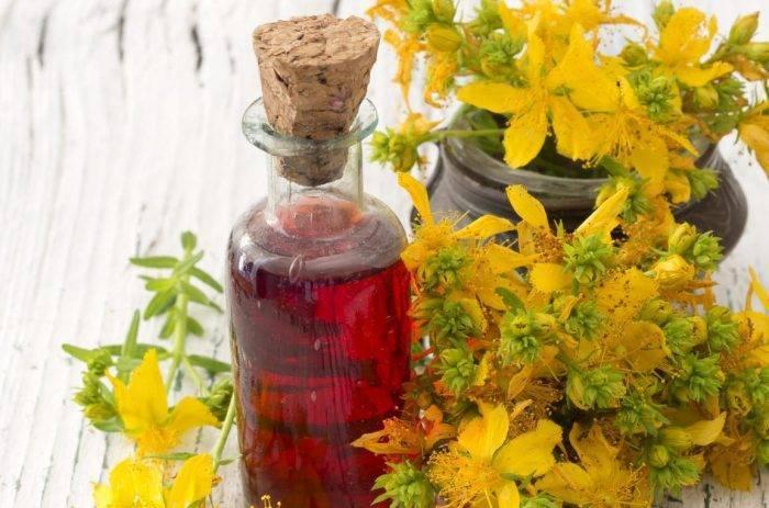 Лечебные свойства травы зверобой для мужчин и женщин, противопоказания, применение масла, настойки, как заваривать чай, отвар