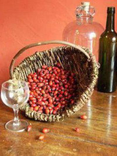 Вино из шиповника. рецепт. как сделать в домашних условиях?