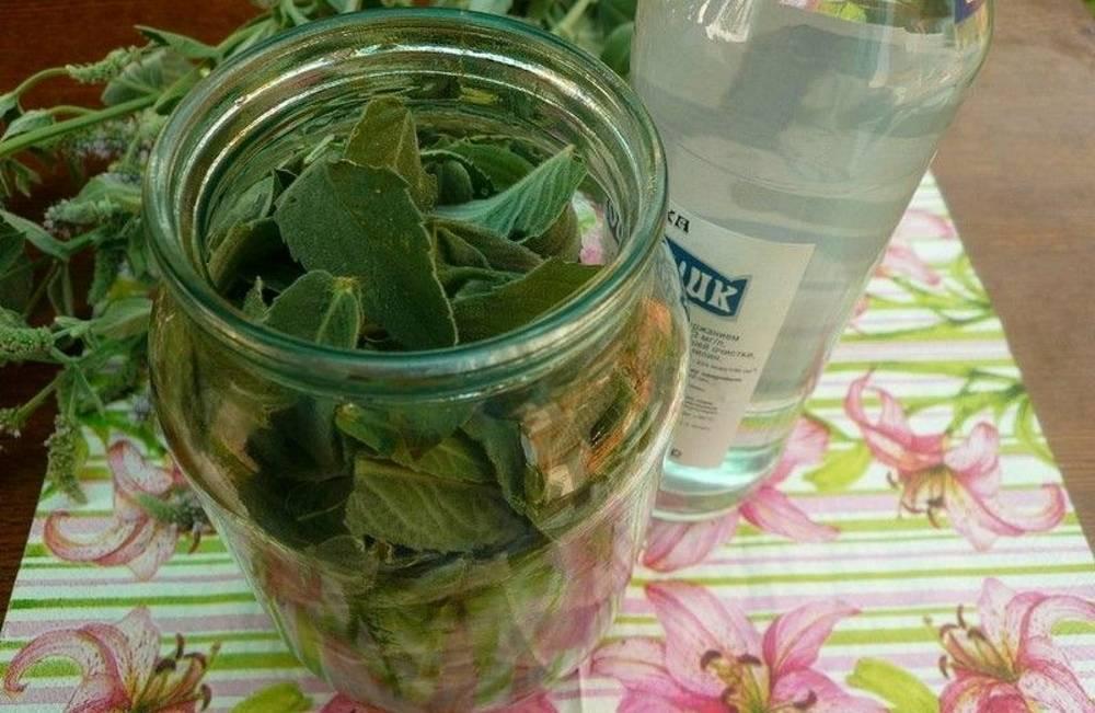 Три удачных рецепта питьевых настоек с мятой на водке (спирте, самогоне)