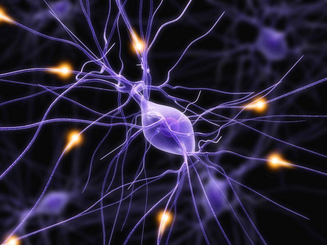 Нервные клетки: и всё-таки они восстанавливаются!