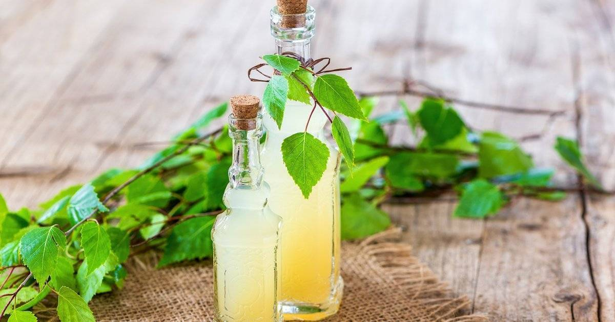 13 лучших рецептов напитков из березового сока на зиму | дачная кухня (огород.ru)