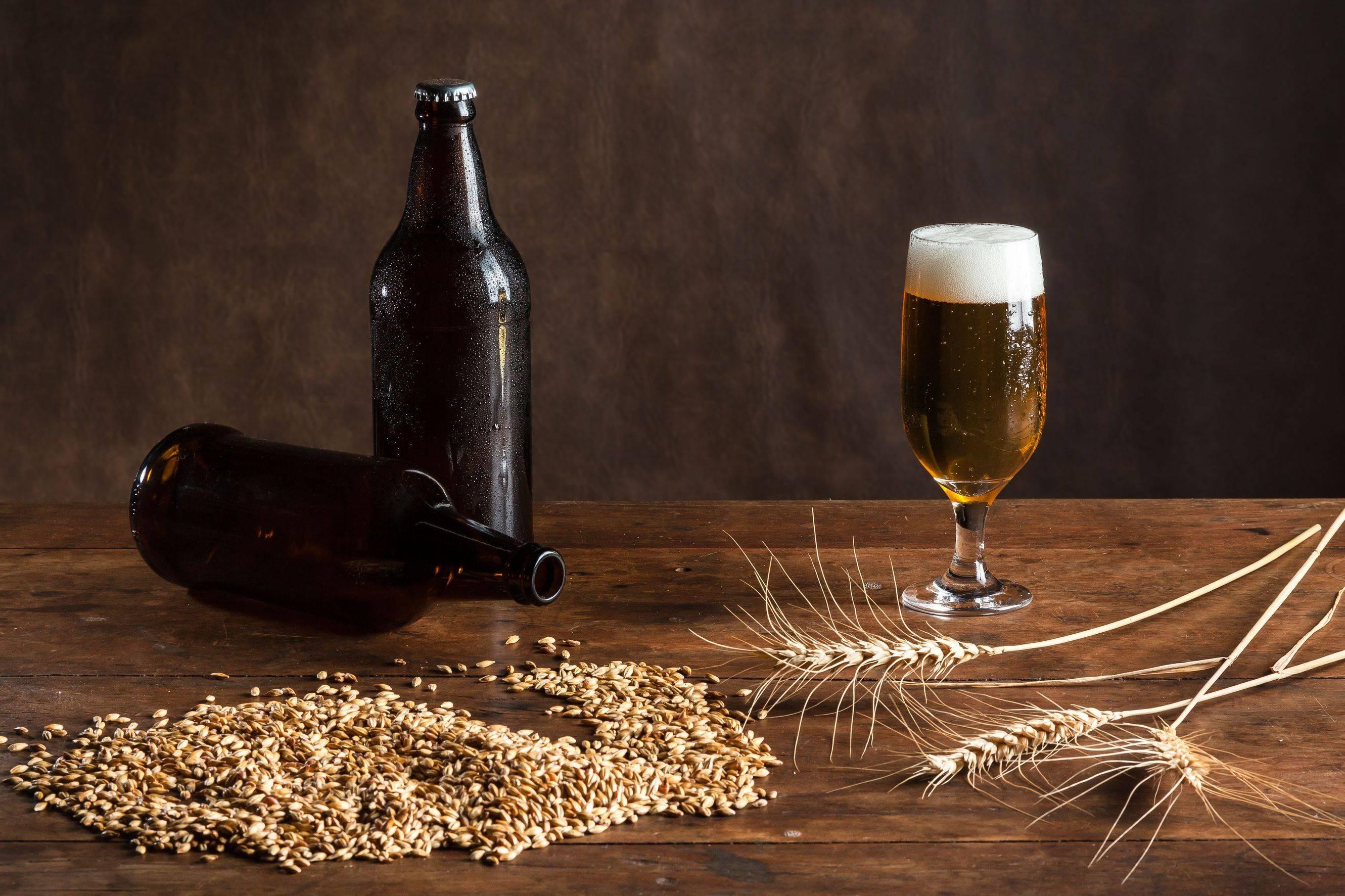 Легкий рецепт пива в домашних условиях из ячменя