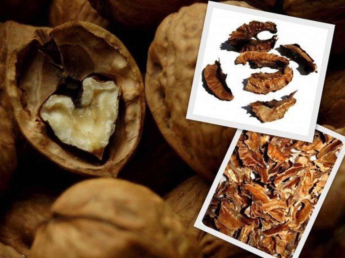 Скорлупа грецкого ореха применение: лечебные свойства, противопоказания, польза
