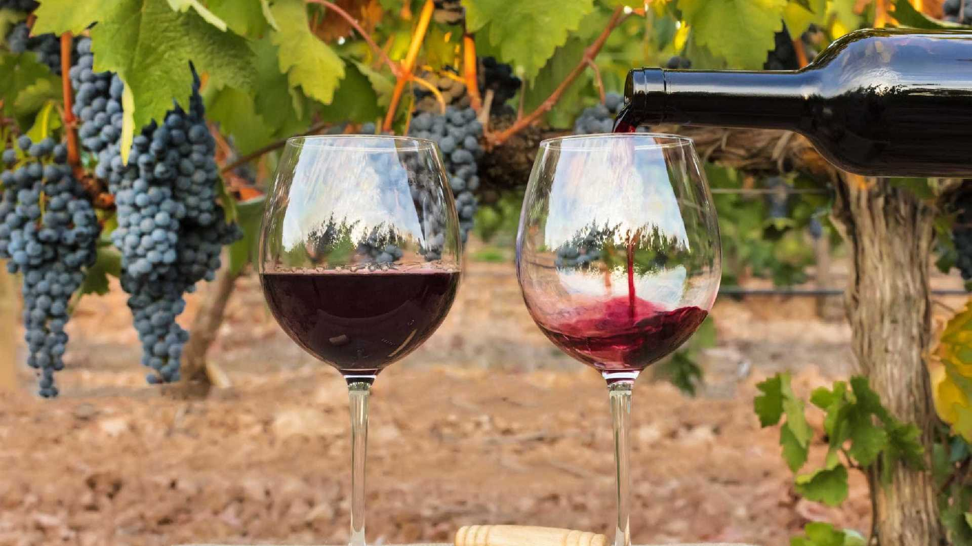 Всемирный день божоле нуво: пять мифов об этом вине - туризм. особенности и правила употребления божоле — вина «младенческого» возраста