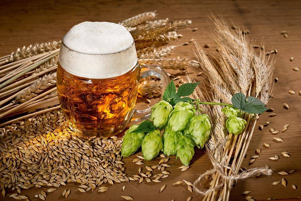 Узнайте рецепт пива из хмеля