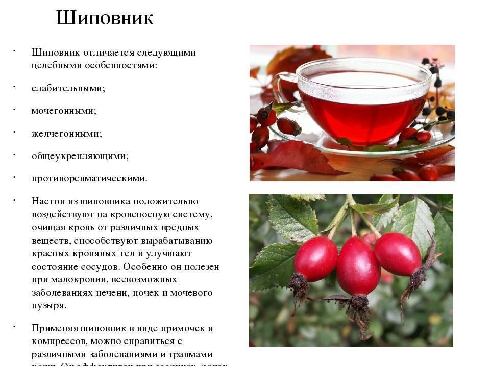 Коньяк при простуде: с медом, с лимоном, анисом и алоэ, а также рекомендации и правила приема коньяка в качестве лекарства