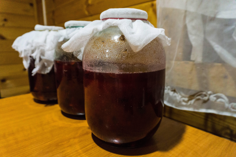 Домашнее вино из терна: простой рецепт приготовления, как сделать в домашних условиях | mosspravki.ru