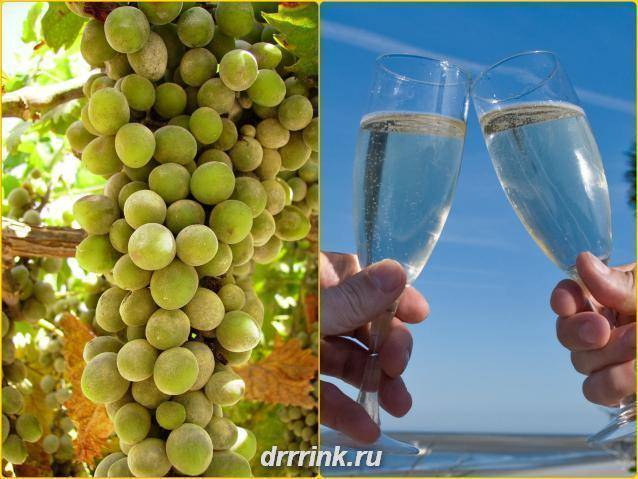 Игристые вина — 5 рецептов в домашних условиях