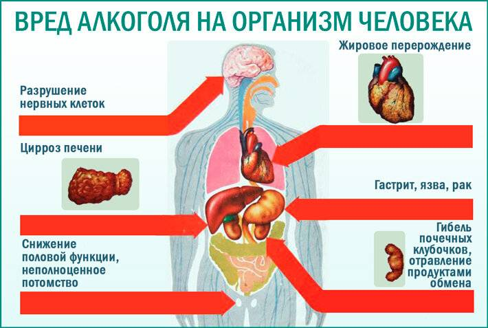 Болят почки после алкоголя - влияние спиртных напитков, причины симптома и препараты для восстановления