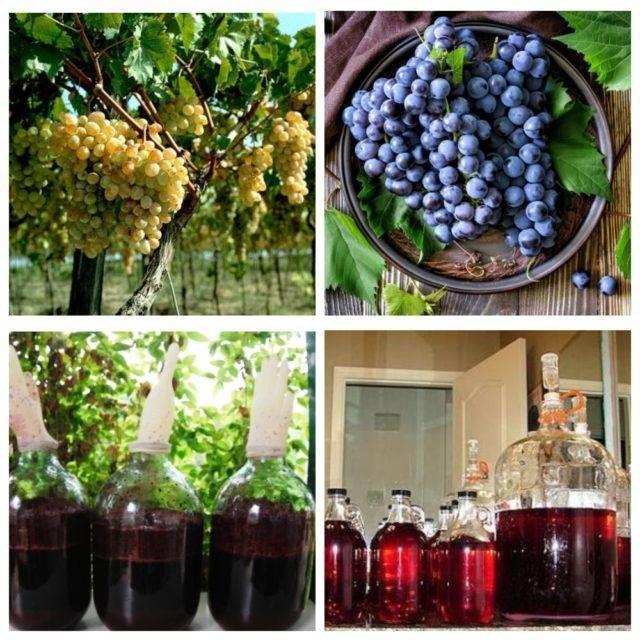Как сделать коньяк из винограда: технология, рецепт,  сорта