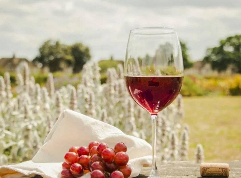 Готовим вкусное вино из винограда лидия