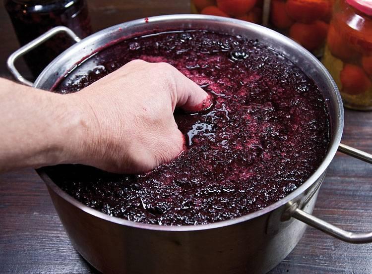 Вино из черноплодки в домашних условиях