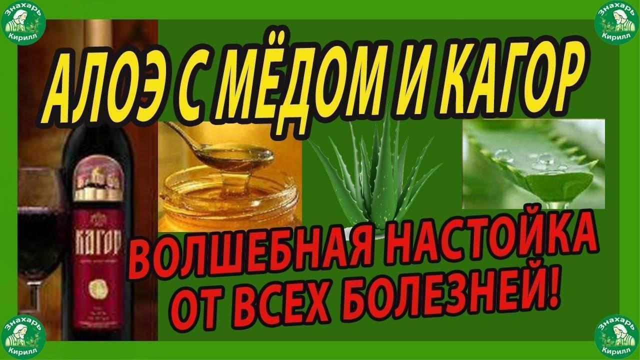 Домашние рецепты настойки из алоэ меда и водки