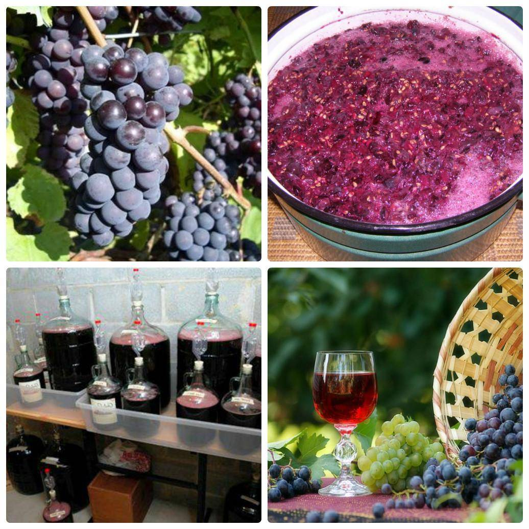 Коньяк из винограда своими руками – идеальная альтернатива подлинному французскому напитку