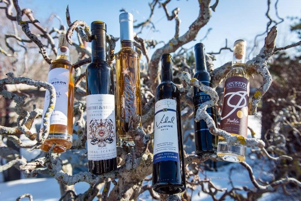 Ледяное вино: что это такое, как готовится айс напиток из замороженного винограда, лучшие марки алкоголя из австрии и других стран