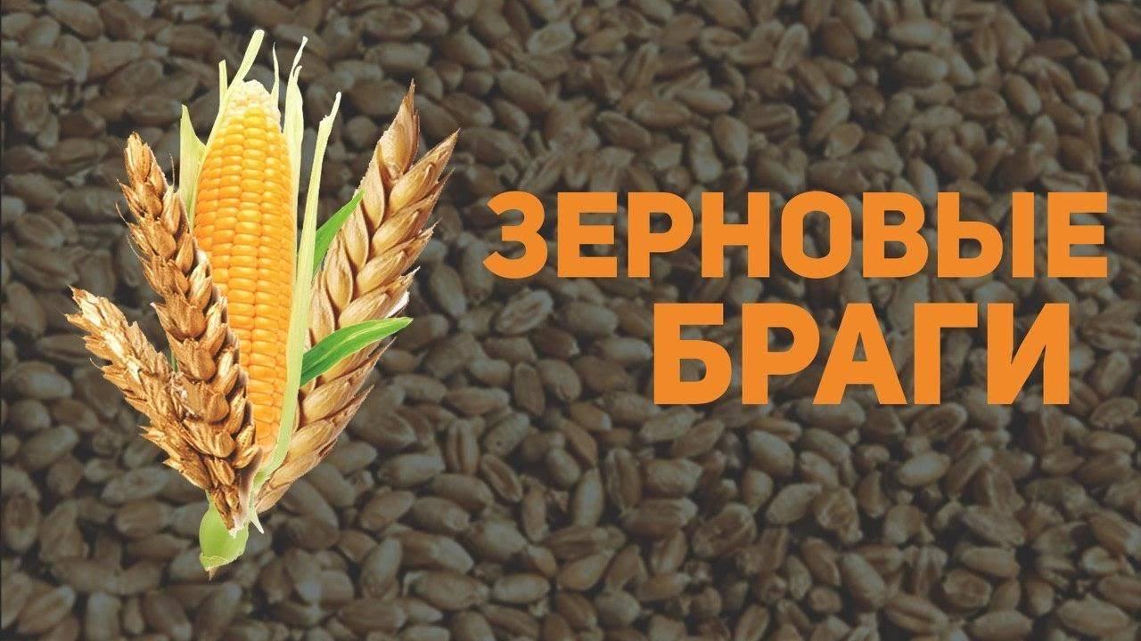 Зерновая брага на пшенице: рецепт - осветление, перегонка, приготовление
