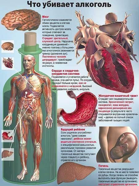 Как алкоголь влияет на рост мышц человека, какое воздействие оказывает алкоголь на мускулатуру и мышечную массу спортсменов