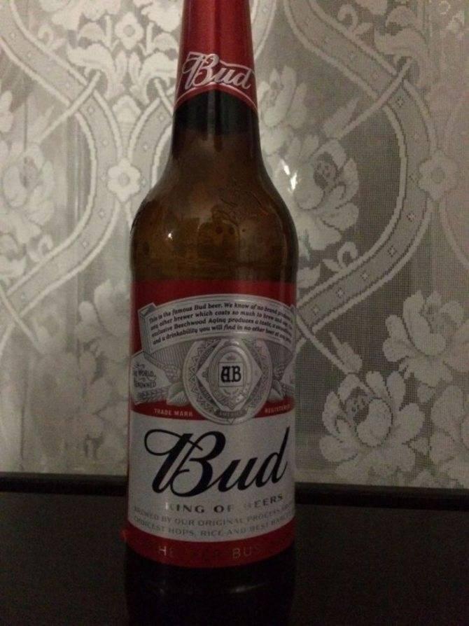 Пиво бад (bud): отзывы, виды и сорта, цена ⛳️ алко профи