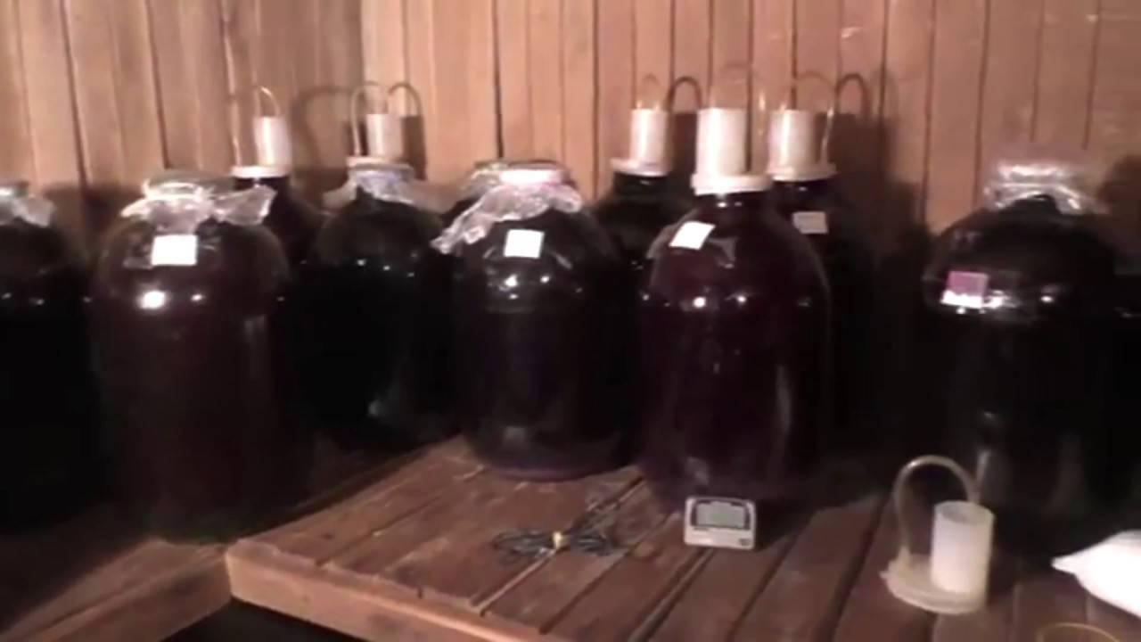 Приготовление вина из слив в домашних условиях, простой рецепт с фото