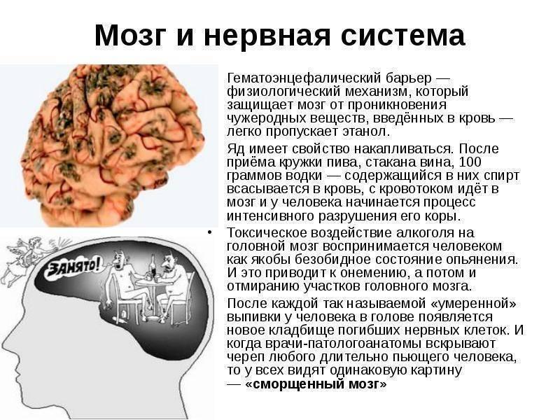 Влияние алкоголя на мозг: механизм воздействия и последствия