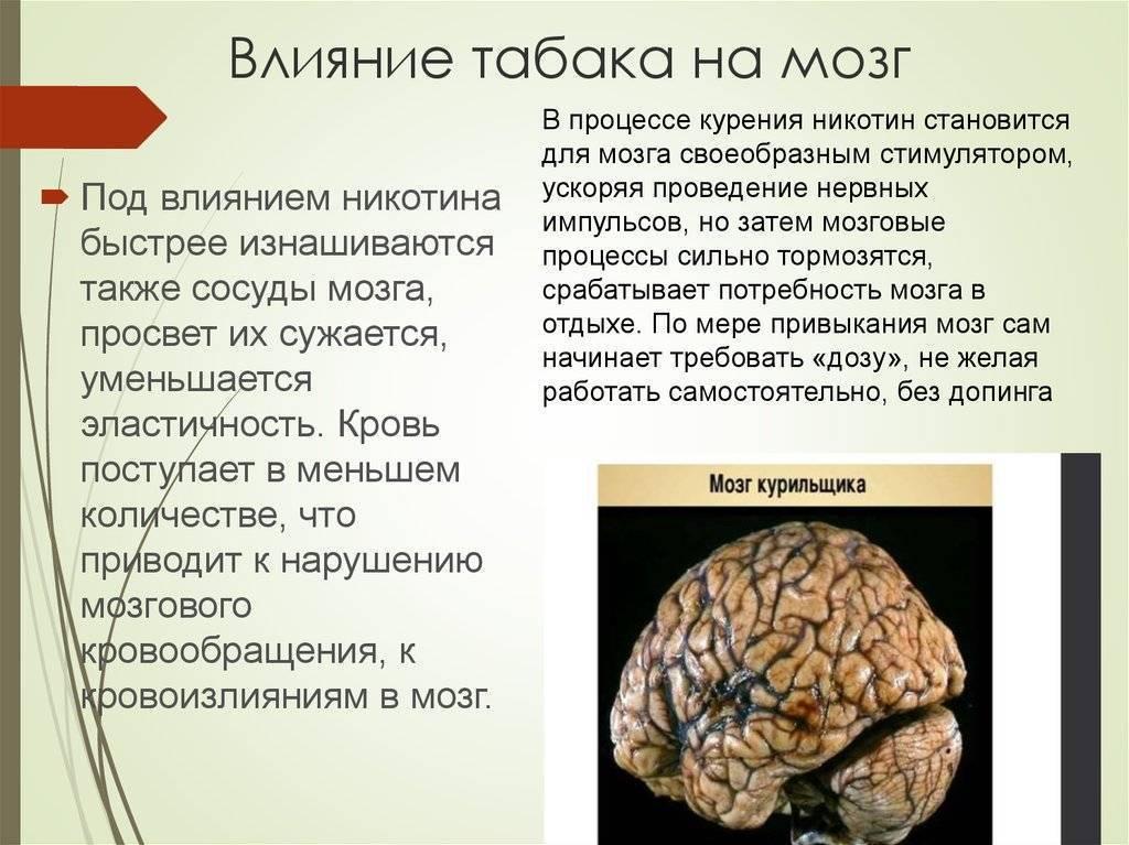 Как алкоголь влияет на мозг человека?