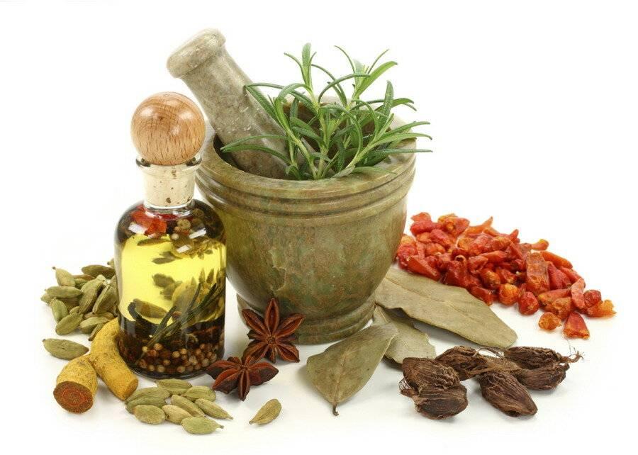 Травы от алкоголизма - рецепты приготовления и применение отваров, настоек и чаев