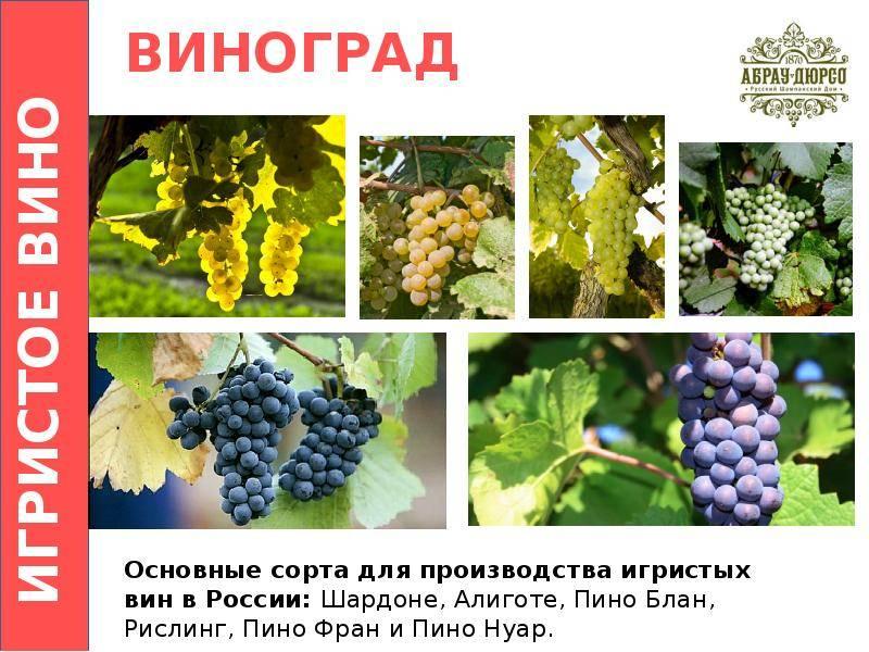 Классификация шампанского по стране, сахару, цвету, типу производителя и ёмкости
