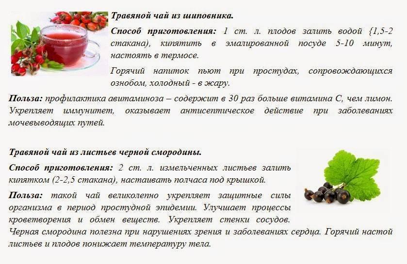 Настойка шиповника на водке: полезные свойства, применение