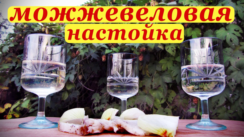 Рецепты настойки из можжевельника в домашних условиях из водки и самогона