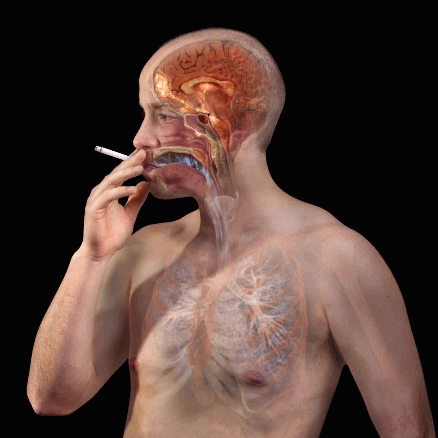 Влияет ли курение на печень