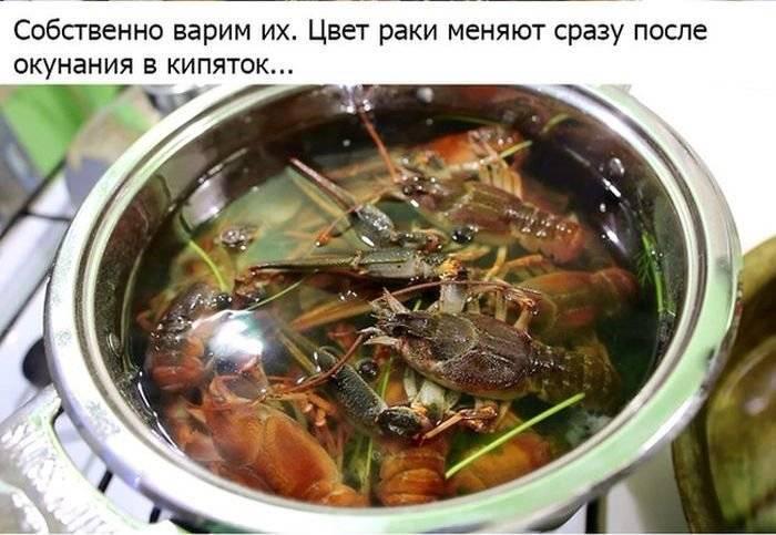 Как варить раков правильно и вкусно, пошаговые рецепты с фото
