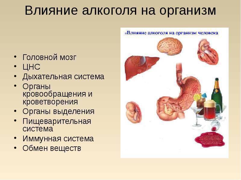 Почему алкоголь снижает иммунитет