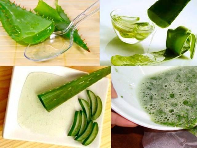 Рецепт настойки из алоэ с медом, на кагоре, водке | womanisation